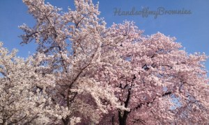 Taken at the Cherry Blossom Festival 2013 in Washington, D.C.  Come on Spring!!